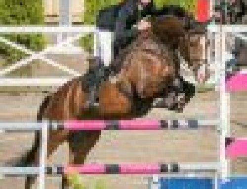Mari Levänen valitsi hevosilleen Vitalbix rehusarjan