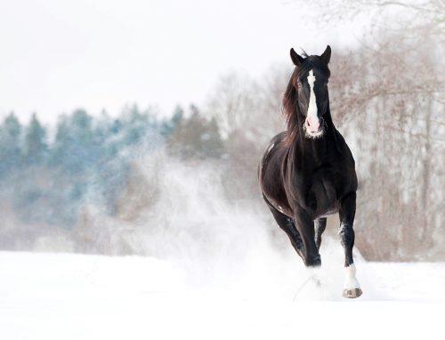 Hevosen talviajan ruokinta